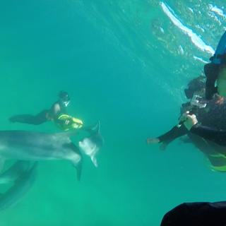 Underwater swimming with dolphins