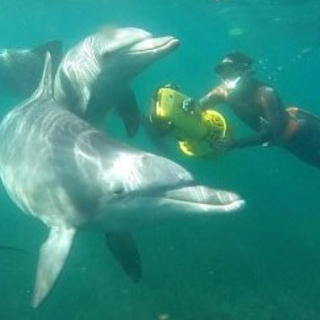 Swimming with dolphins Australia