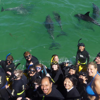 Crew on board with dolphins